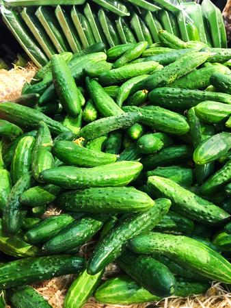 Pila de pepinos verdes orgánicos frescos en un mercado de cerca Foto de archivo