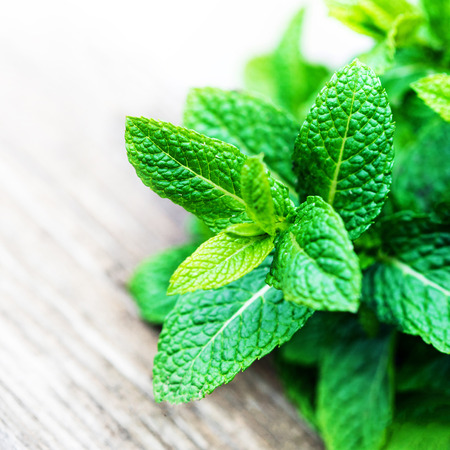 Fresh mint leaf,  lemon balm herb on wooden background with copyspace, close up