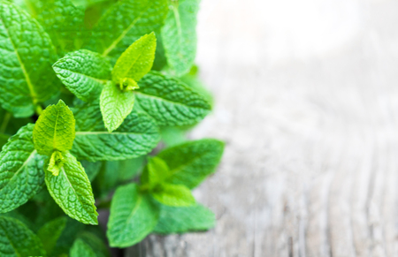 Fresh mint leaf,  lemon balm herb on wooden background with copyspace, close up. Top view