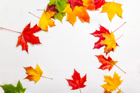 Colorful autumn leaves. Abstract fall background. Falling Marple leaves on white background. Stock Photo