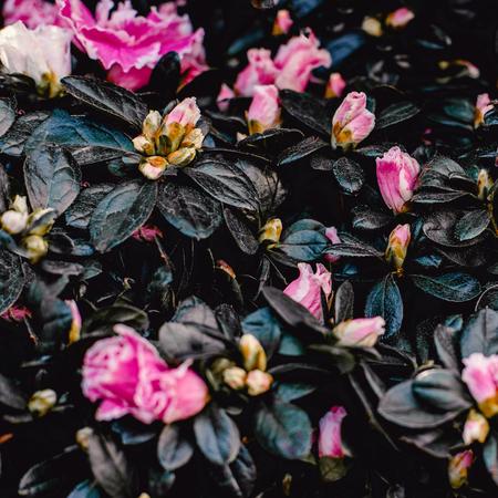 Flower background. Cute  colorful flowers Pattern. Banco de Imagens - 122107679