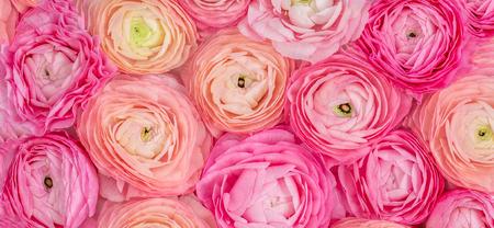 Flower pattern. Pink Ranunculus flowers textured background. Summer floral  Wallpaper Banco de Imagens - 122107680