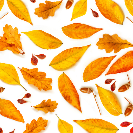 Autumn Pattern. Fall composition with   acorns, golden marple and oak  leaves isolated on white background. Flat lay, top view Banco de Imagens