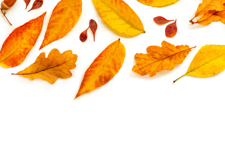 Autumn Pattern. Fall composition with   golden marple and oak  leaves isolated on white background. Flat lay, top view Banco de Imagens