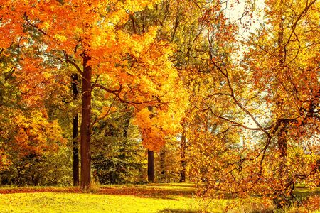 Autumn. Fall scene. Countryside landscape with red and yellow maple leaves, trees and meadow. Banco de Imagens