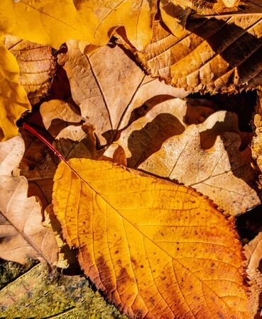 Autumn Background with Brown and Yellow  Autumn Leaves. Banco de Imagens - 124565189