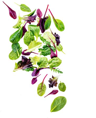 Flying Salad Leaves isolated on white background. Fresh mixed salad with arugula, lettuce, spinach and beets leaf. Banco de Imagens