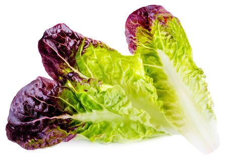 Salad leaves. Purple Lettuce leaf  isolated on white background. Close up