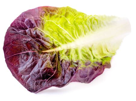 Salad leaf. Red Lettuce isolated on white background
