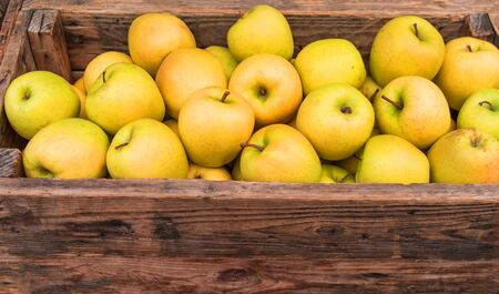 Yellow apples in wooden box close up. Autumn and fall harvest background with space for text
