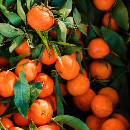 Mandarines, tangerine or  clementines with green leaves as  background. Fresh orange fruits. Top view