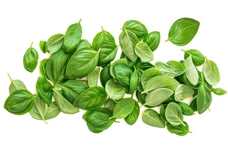 Fresh basil leaf isolated on white background, close up. Heap of Basil herb. View from above Reklamní fotografie