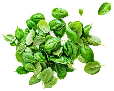 Fresh basil leaf isolated on white background, close up. Pile of Basill herb. Top view