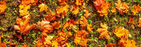 Autumn Background with Red and Orange Autumn Leaves on a ground. Autumnal concept