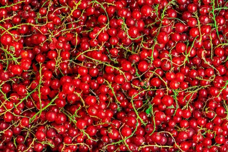 Red currant berries  background. Heap of Fresh Currant. Abstract Food texture. Top view. Banco de Imagens