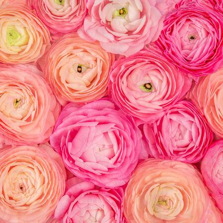 Flower pattern. Pink Ranunculus flowers textured background. Summer floral  Wallpaper Фото со стока
