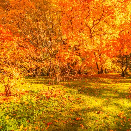 Autumn landscape Background. Fall scene panorama
