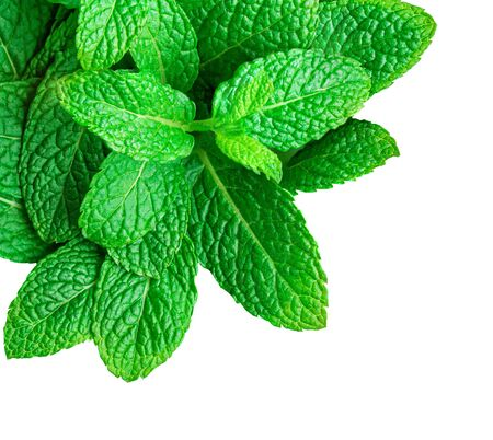Mint leaves isolated on white background. Heap of Spearmint leaves, peppermint, close up