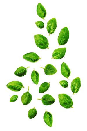 Flying Fresh basil herb leaves isolated on white background. Top view. Flat lay. Reklamní fotografie