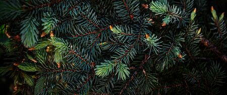 Creative layout made of Christmas tree branches close up. Festive Xmas border for New Year Design. Flat lay.