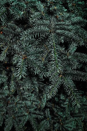 Closeup of Christmas tree with fir tree branches. Festive Xmas Background