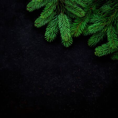 Christmas Tree Pine Branches on  black background. View from above. Copyspace