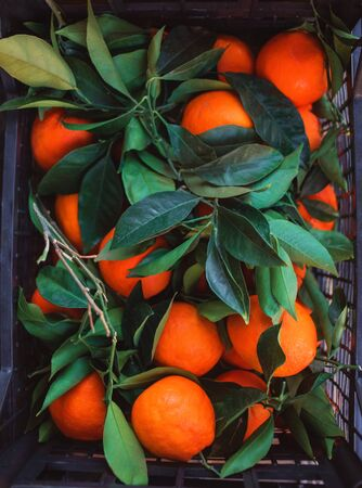 Ripe Mandarines tangerine, clementine with leaves in basket over dark background. Top view