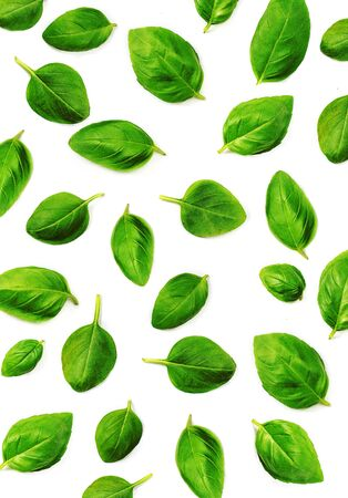 Basil  leaf Pattern. Fresh green basil herb isolated on white background. Top view. Flat lay. Reklamní fotografie