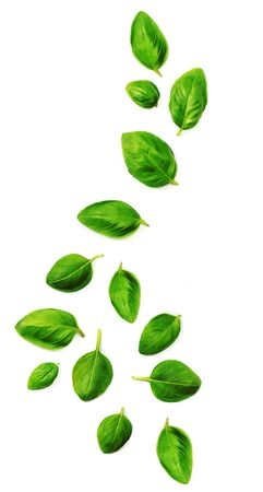 Flying Fresh basil leaves isolated on white background. Top view. Flat lay.