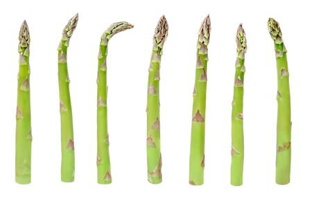 Asparagus Isolated. Collection of fresh  asparagus steams on white background close up. Food concept.