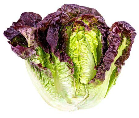 Lettuce leaves isolated on white background. Fresh Salad leaf close up. Stock Photo
