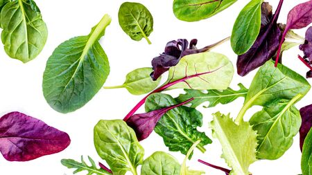 Flying Salad Leaves Pattern. Fresh leaves isolated on white background. Creative layout with arugula, lettuce, chard, spinach. Flat lay