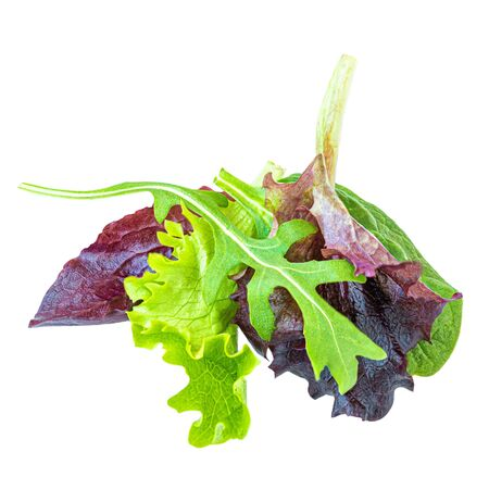 Salad leaves Isolated.  Mix Salad leaves with Spinach, Chard, lettuce, rucola on white background. Close up