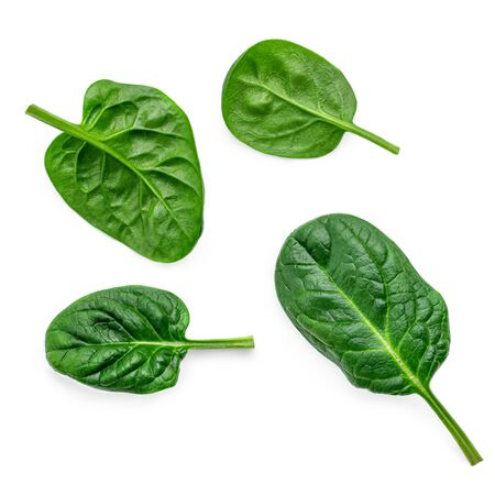 Creative layout made of Fresh spinach leaves isolated on white background.
