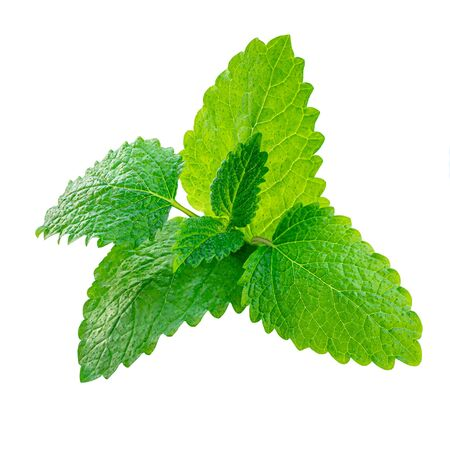 Fresh Lemon balm (Melissa officinalis) leaves isolated on a white background. Mint, peppermint close up