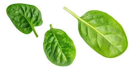 Spinach. Creative layout made of  Spinach leaves   isolated on white background.  Top view. Flat lay. Banco de Imagens