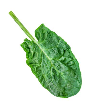 Spinach leaf   isolated on white background.  Fresh Spinach. Top view. Flat lay.