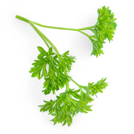 Parsley. Green leaves of Parsley herb isolated on white background.  Top view. Flat lay Banco de Imagens