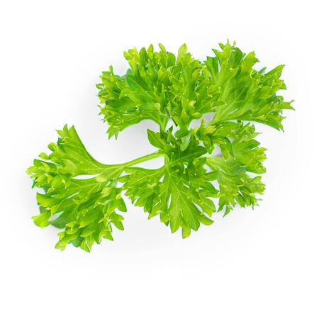 Parsley. Green leaves of Parsley herb isolated on white background.  Close up. Top view Banco de Imagens