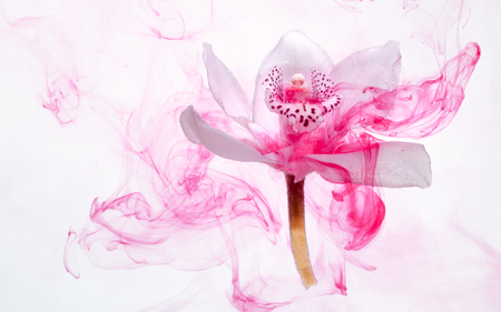 White orchid inside the water on a white background whith pink paints. Watercolor style and abstract image of white orchid. Фото со стока