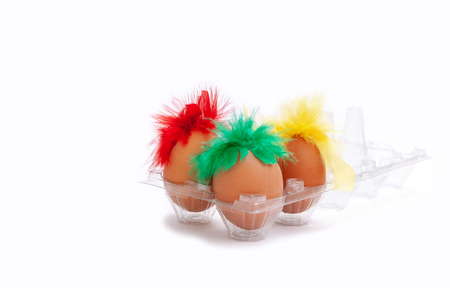 Three chicken eggs with red, green and yellow feathers on the white background.