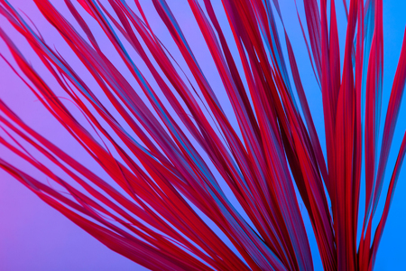 Pink dry branches isolated on blue and pink background. Tropical purple and red dried grass. Abstract texture.
