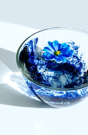 Blue flower in glass plate with water and blue acrylic paint. Bright rays sunlight with shadow on white background and blue astra. Still life. Top view Reklamní fotografie