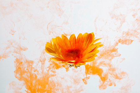 Yellow flower inside water on the orange and red background whith yellow acrylic paints. Watercolor style and abstract spring image of astra.