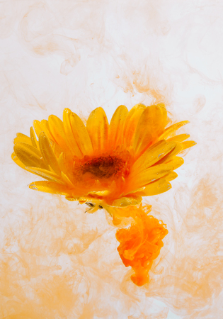 Yellow flower inside water on the orange and red background whith yellow acrylic paints. Watercolor style and abstract spring image of astra. Reklamní fotografie - 119820085