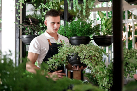Young smiling man florist working in the garden or greenhouse. An attractive guy makes design of an interior or a cafe of pots with plants.
