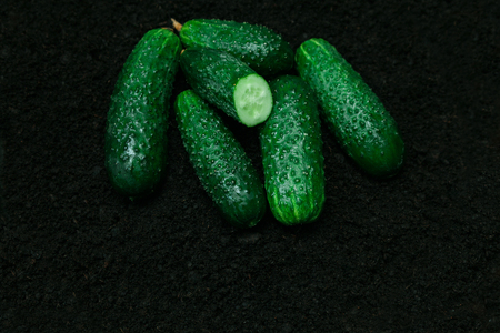 Ripe green cucumbers on the black background. Several organic ripen vegetables on the ground.