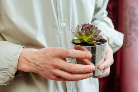 Mens hands holds a pot with rooms flowers Aeoniums. Florist with flowers in vase.