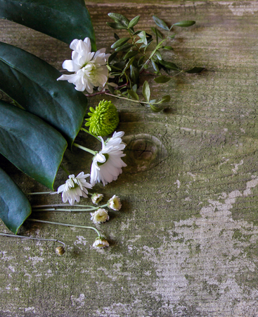 Green and white flowers on green old wooden background, top view. Monstera and different wild flowers.