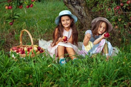 Little girls collects ripe red apples in a large wicker basket. Two sisters sit on the grass against background of apple trees.